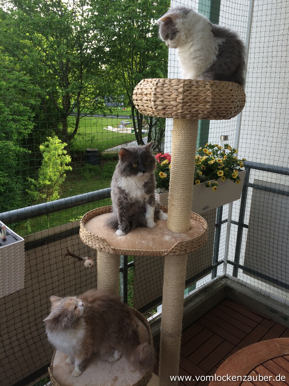 Roxana, Maxi und Orestina