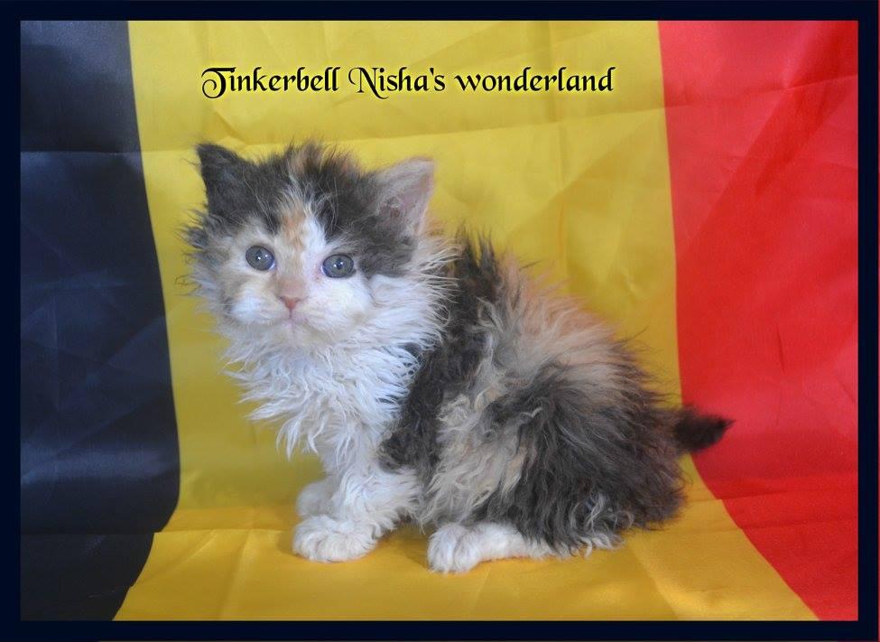 Tinkerbell Nisha's Wonderland