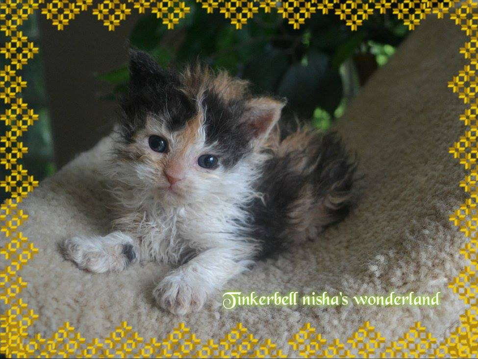 Tinkerbell Nisha's Wonderland Tag 2!