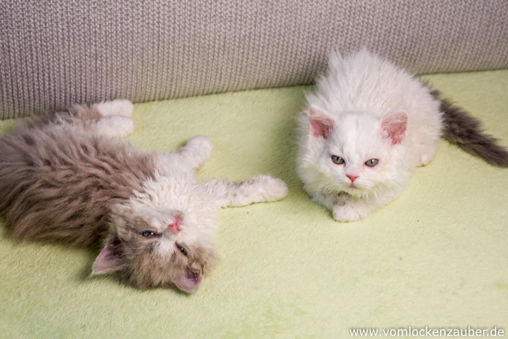 Estella Snoopy und Emilia