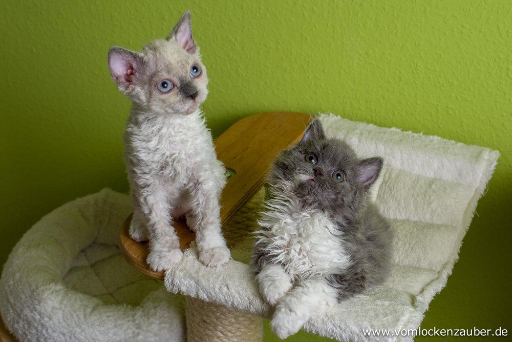 Eddy und Elli