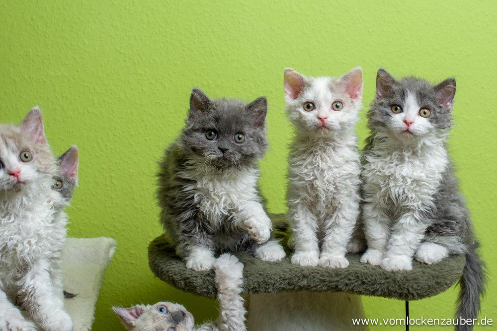 Snoopy, Elli, Elias und Evo