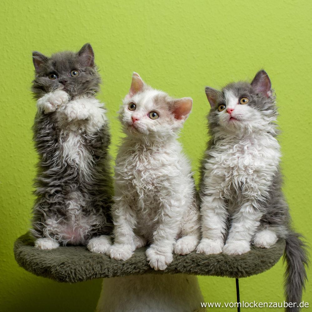 Elli, Elias und Evo