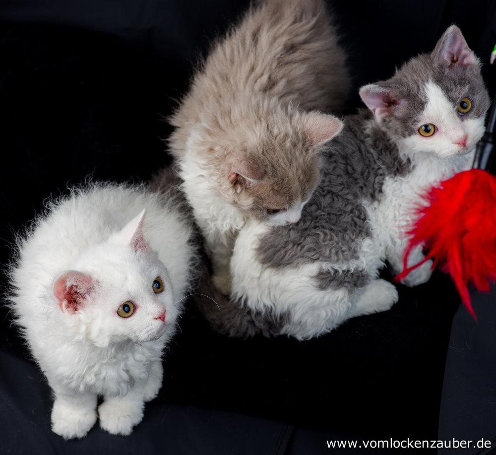 Emilia, Snoopy und Kudo