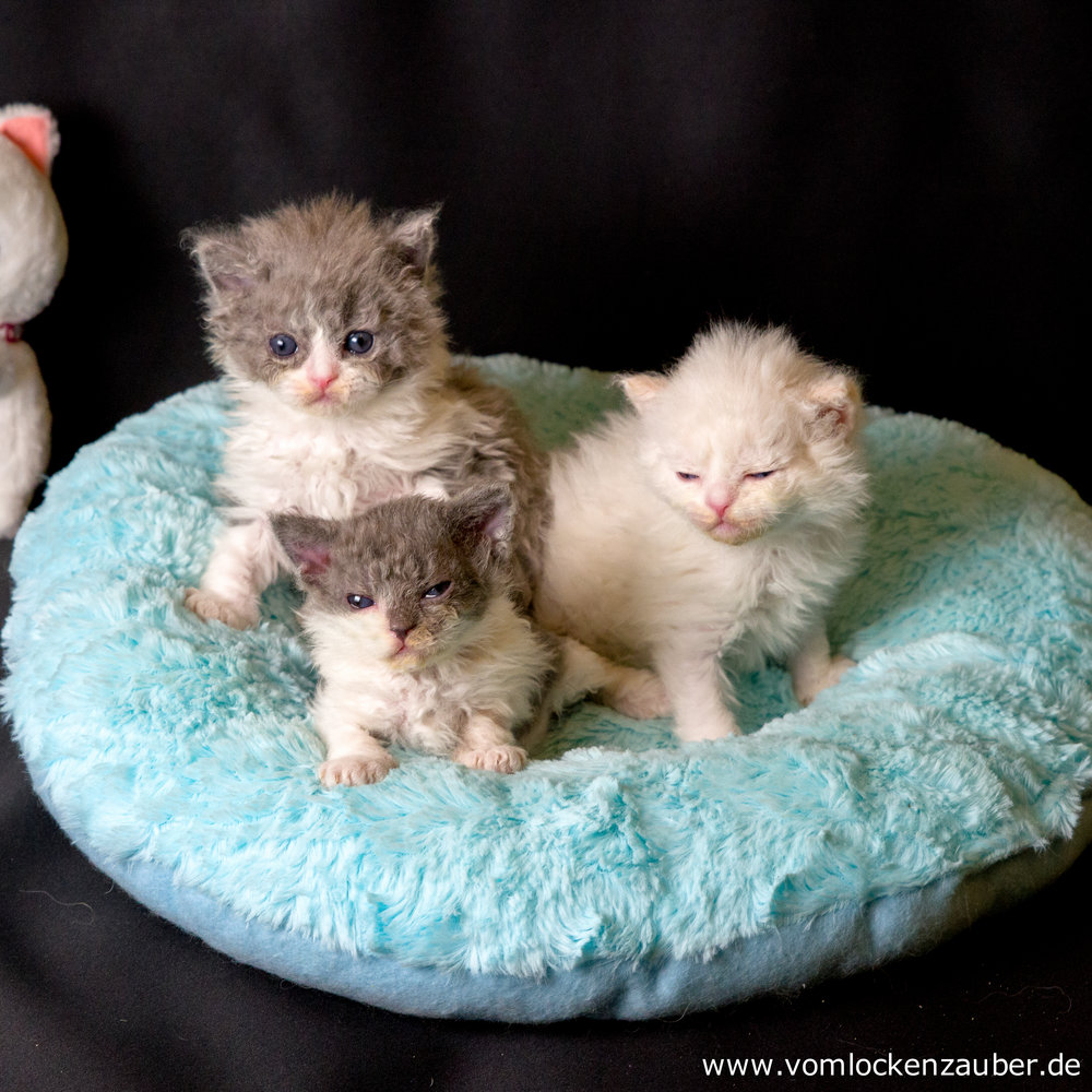 Fenek, Fenja und Filou
