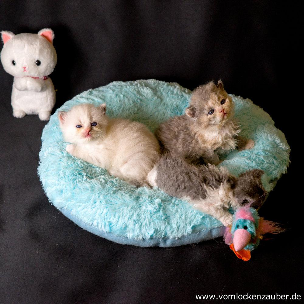 Fluffel, Fenja und Fientje