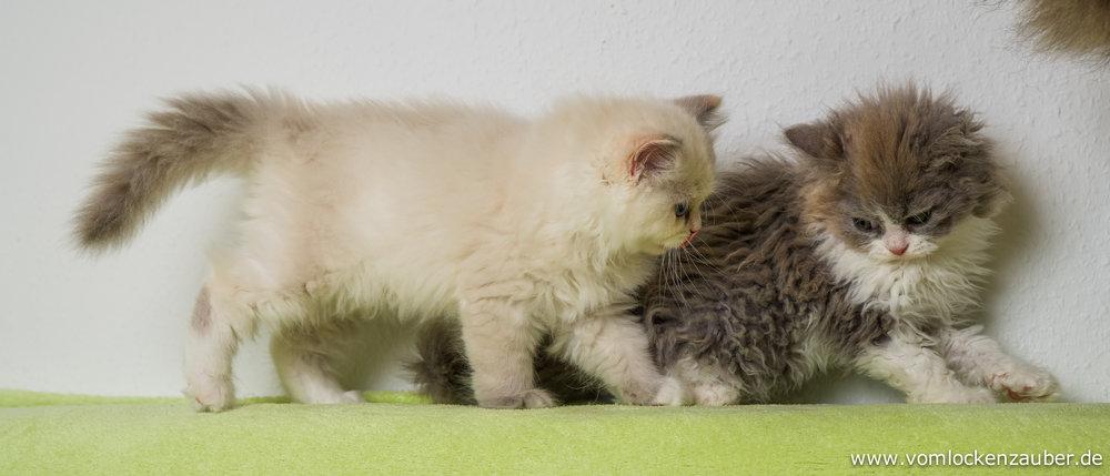 Fluffel und Fenek