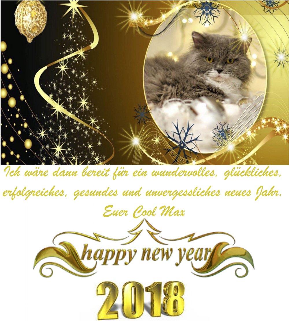 Guten Rutsch ins Neue Jahr!!!! — Vom Lockenzauber - Selkirk-Rex ...