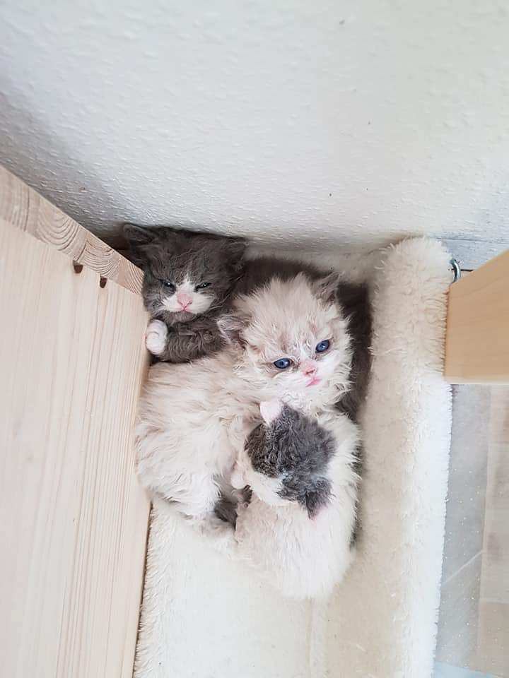 Stapelkatzen Gismo, Grisu, Greta