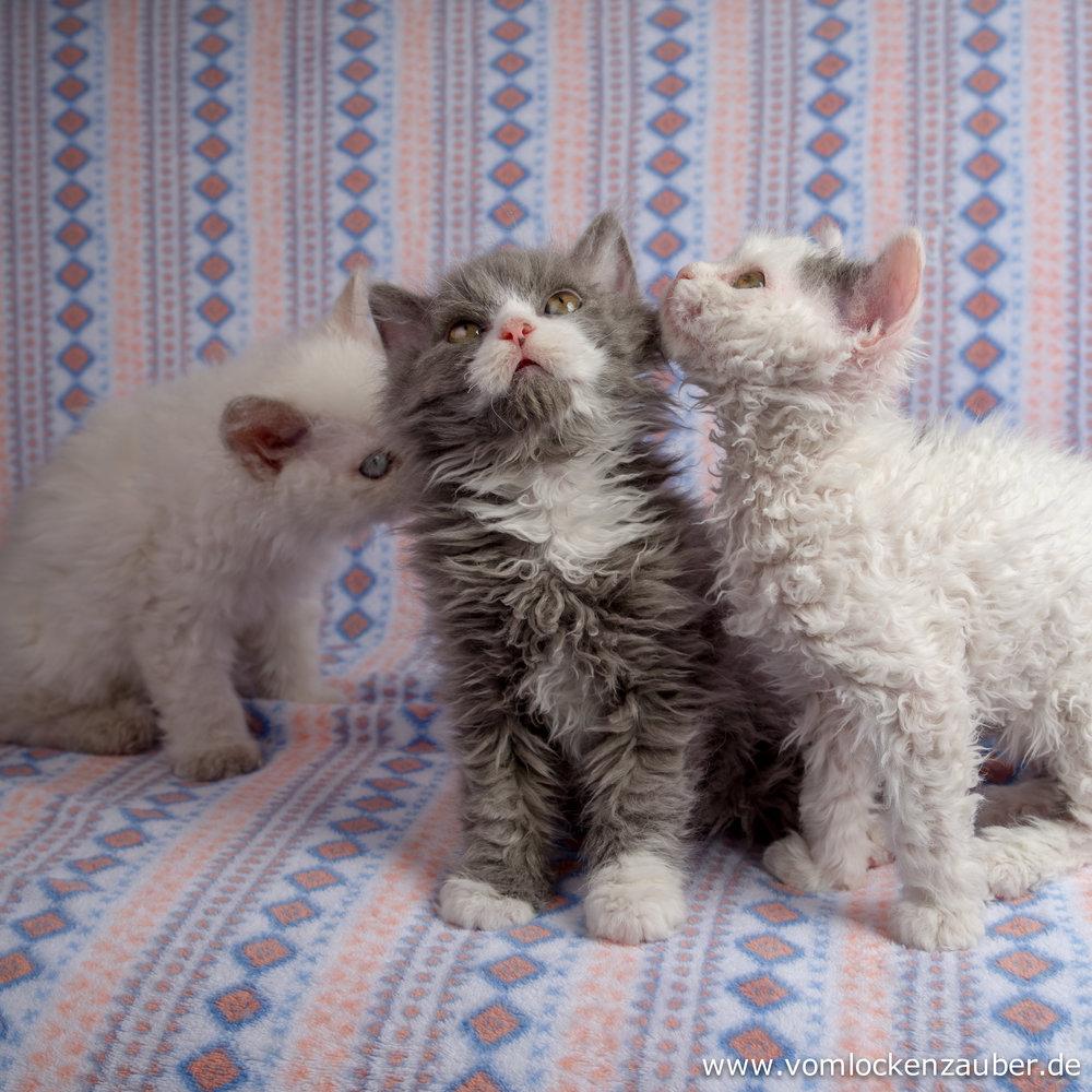 Gracie, Gismo und Greta