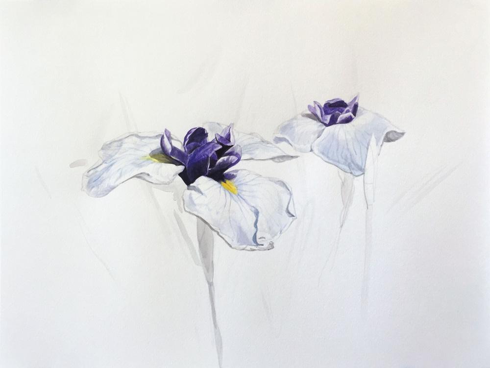 Two Irises (#910)