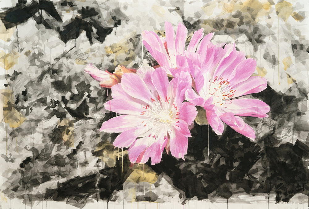 Lewisia with Crystal Background