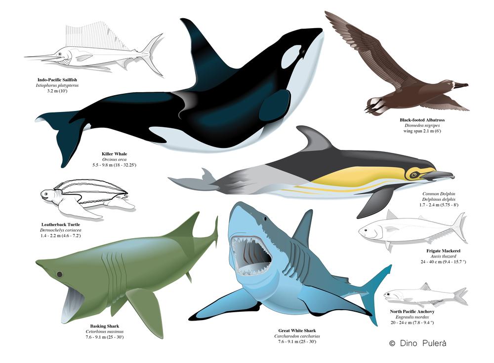 Marine vertebrates.jpg