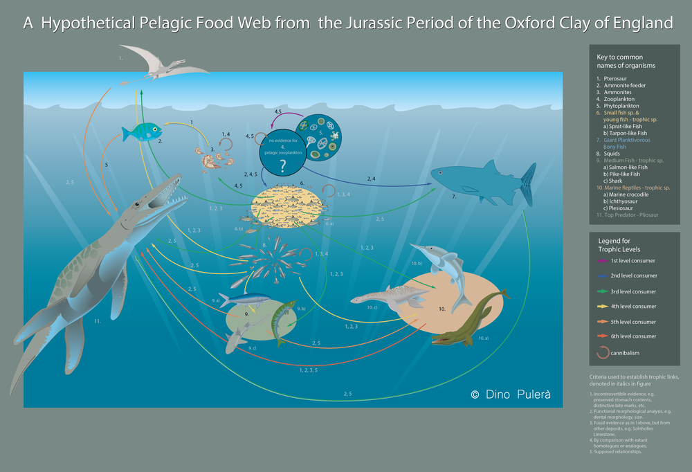 Prehistoric Food Web.jpg
