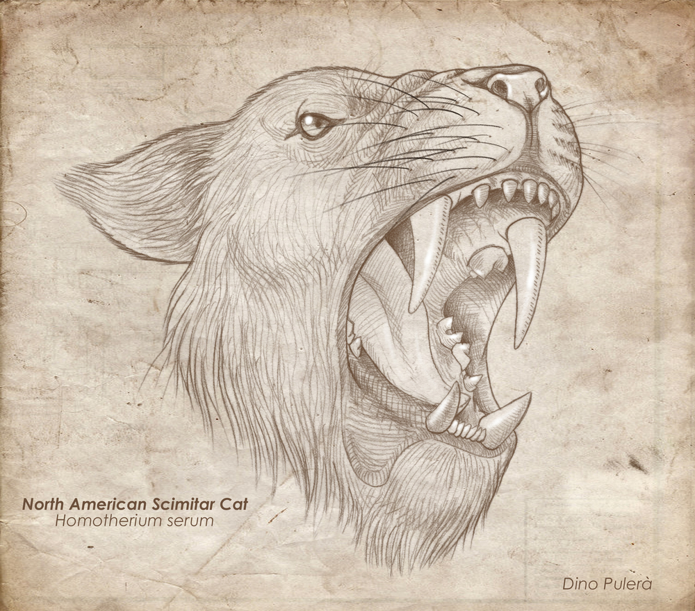 Scimitar cat_Homotherium_head.jpg