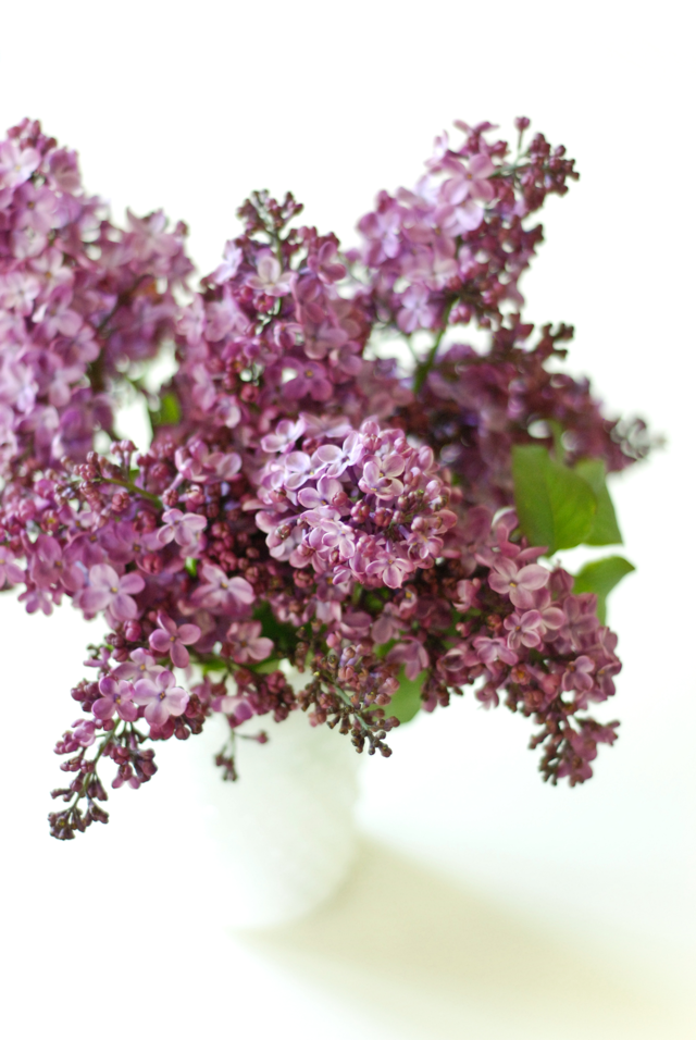 LaurylLane-Lilac-01