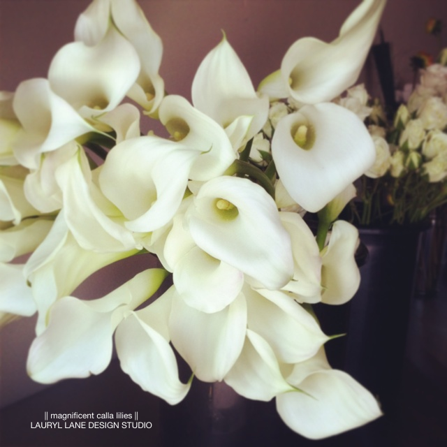 LaurylLane-Instagrams-3808