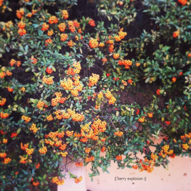LaurylLane-Instagram-4110