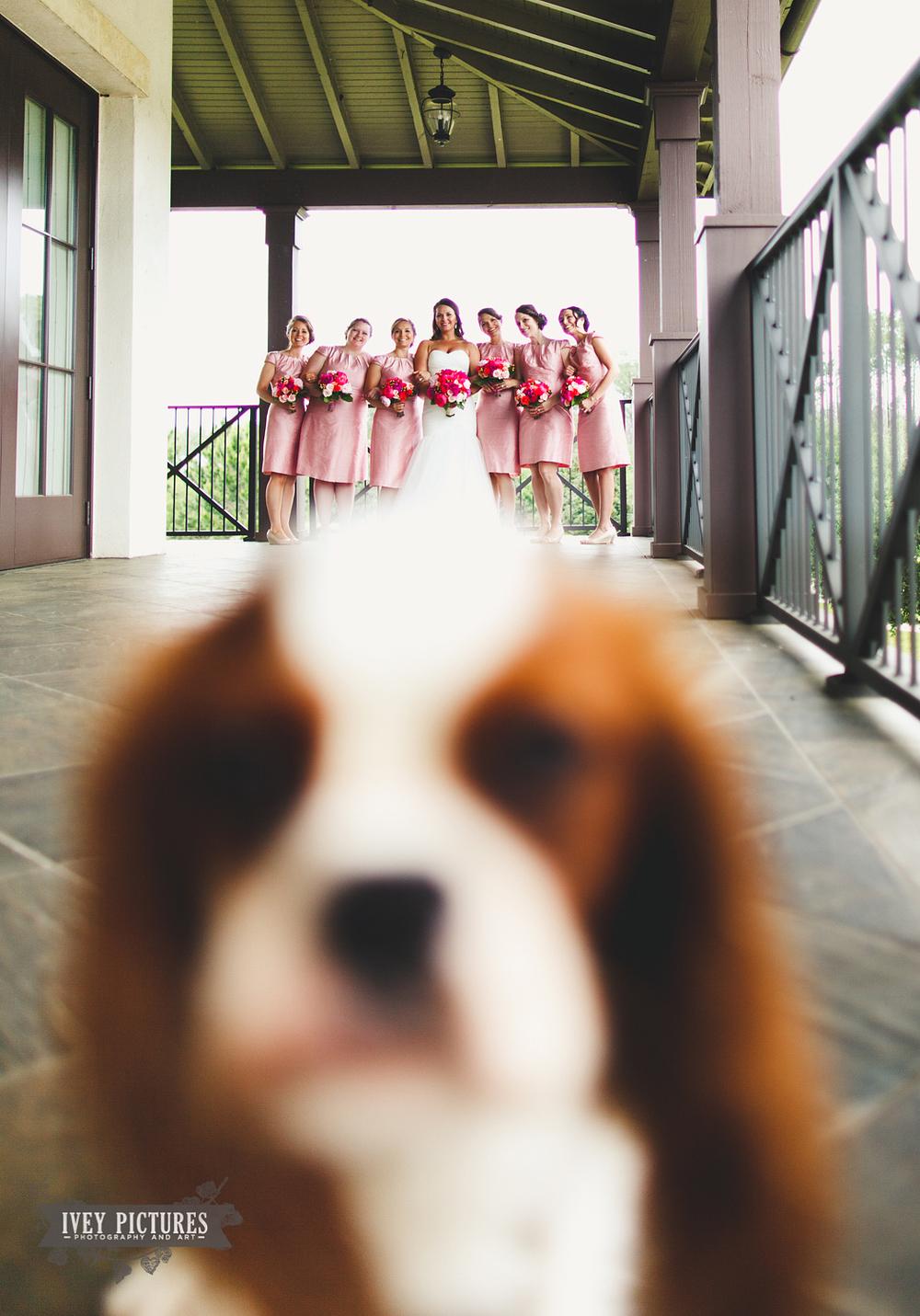 Dog Photobomb at Wedding