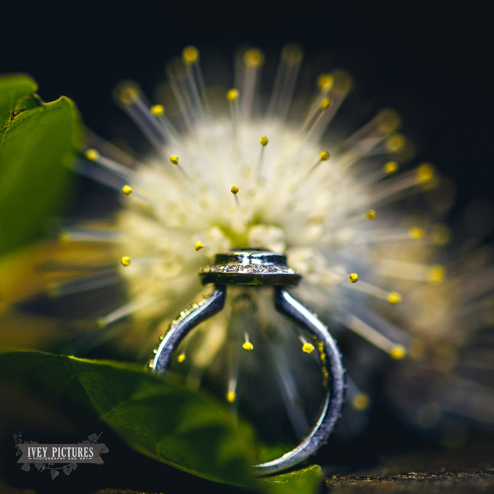 Macro ring photos