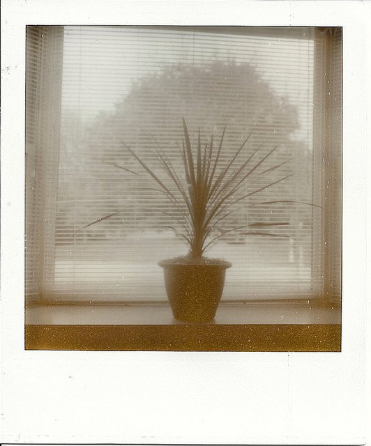 Untitled Polaroid 100810  on Flickr.