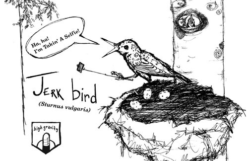 jerkbird.jpg
