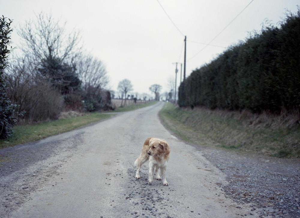 Dog France.jpg