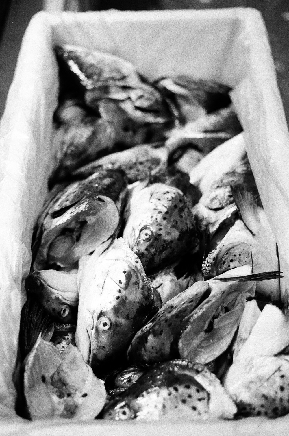 Fish at the Albert Kuyp Market
