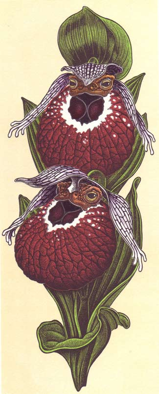 39--Cypripedium-tibeticum.jpg