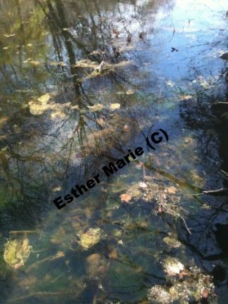 """Caumsett Reflections, 11"""" X 8.5"""" Digital Photograph"""