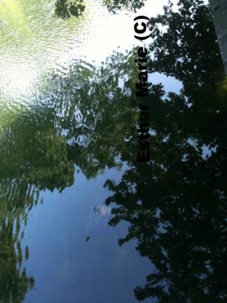 "Hecks Reflection #2 11"" X 8.5"" Digital Photograph"
