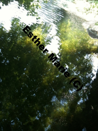 "Hecks Reflection #3 11"" X 8.5"" Digital Photograph"