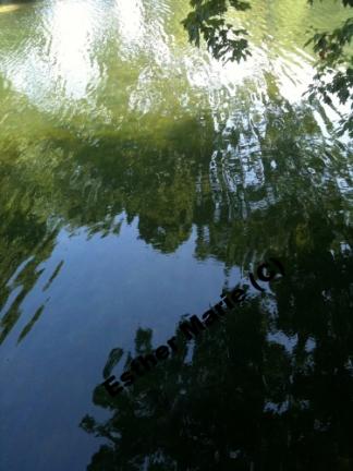 "Hecks Reflection #6 11"" X 8.5"" Digital Photograph"