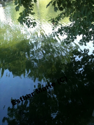"Hecks Reflection #9 11"" X 8.5"" Digital Photograph"
