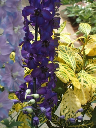"Westbury Garden Hollyhocks 11"" X 8.5"" Digital Photograph"