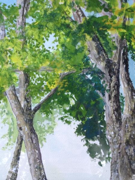 "Canopy of Trees, 9 1/2"" x 6"", Gouache"