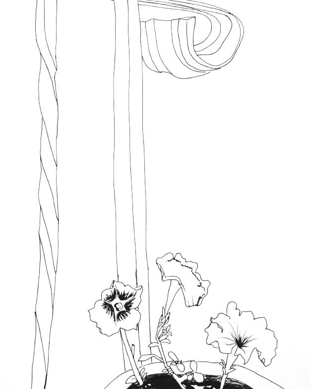 "Petunia, 8 1/2"" x 11"", Ink"