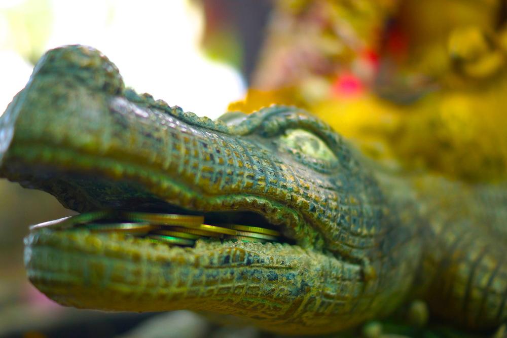 14 croc.JPG