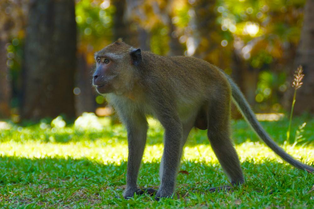 9 monkey 1.jpg