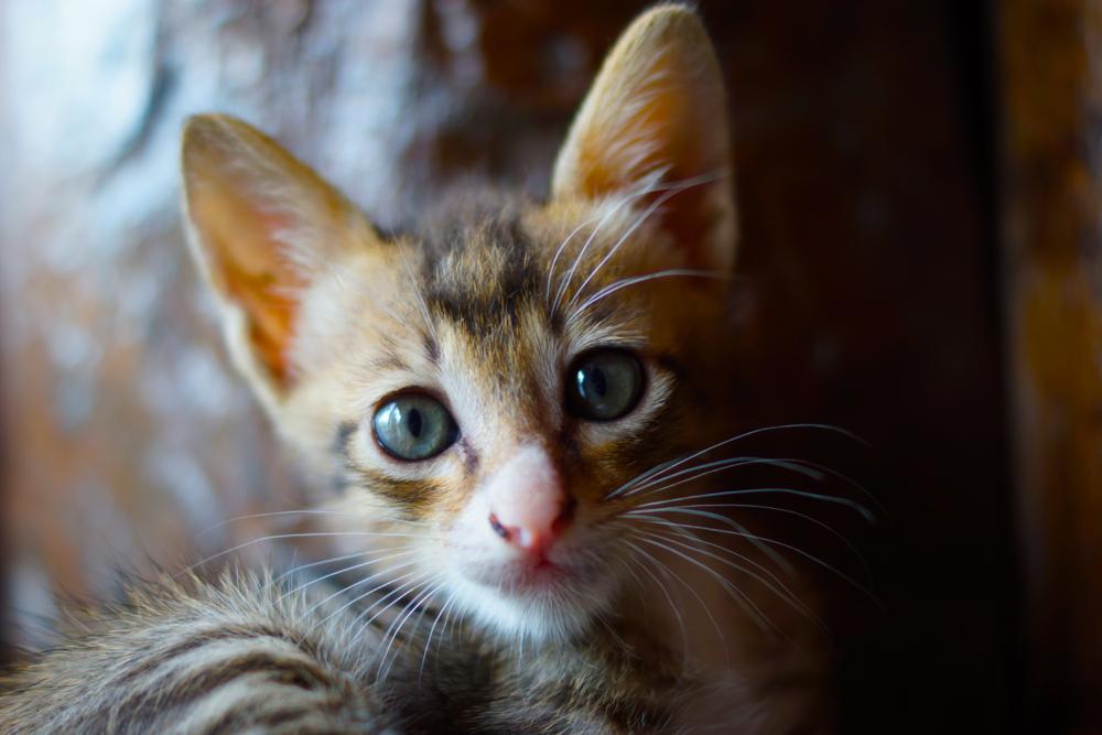 1 cat.jpg
