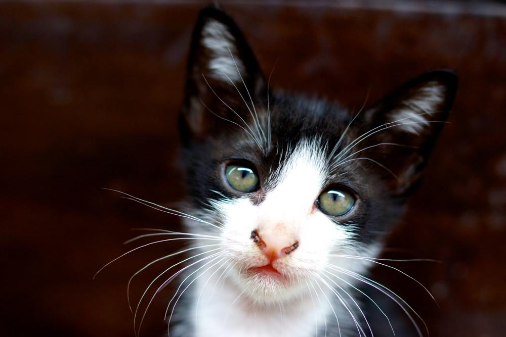 2 bw cat 2.jpg