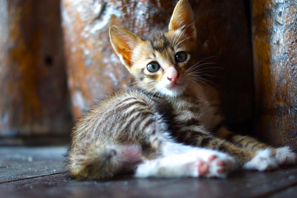 Hotel kitten.
