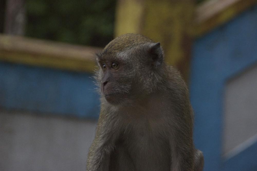 16 monky face.jpg