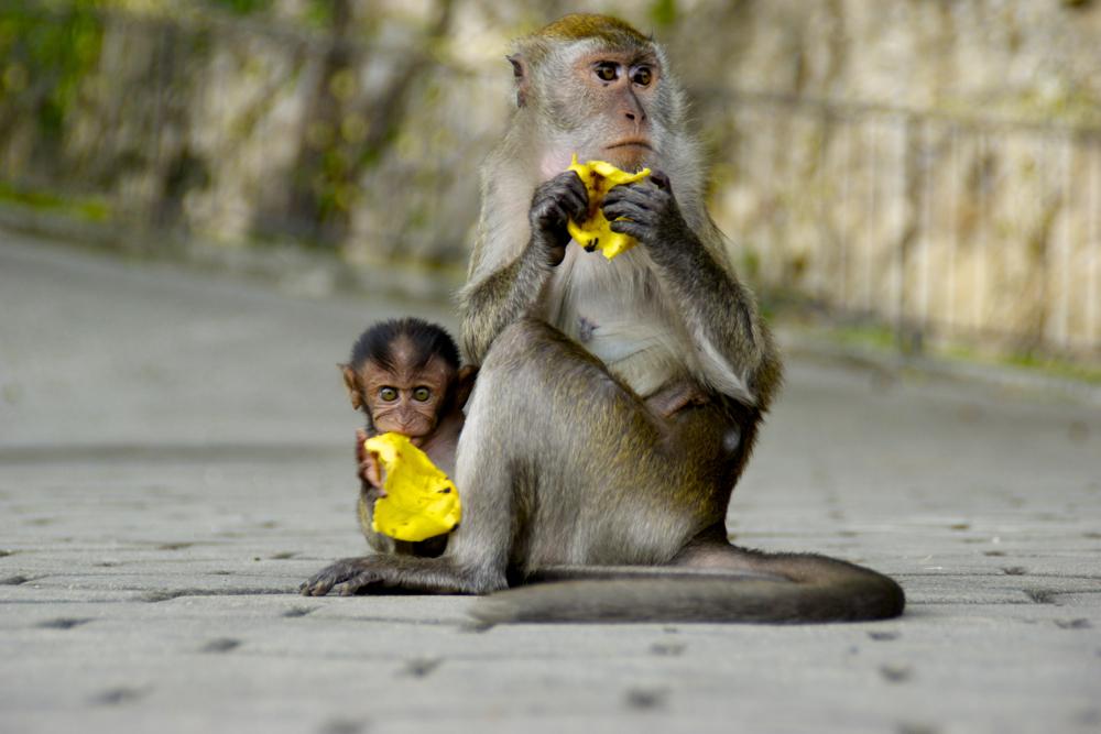 1 monkeys.jpg