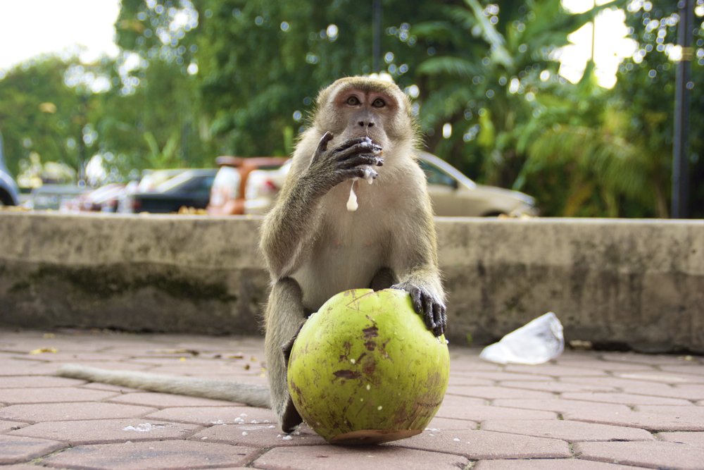 1 monkey coco 2.jpg