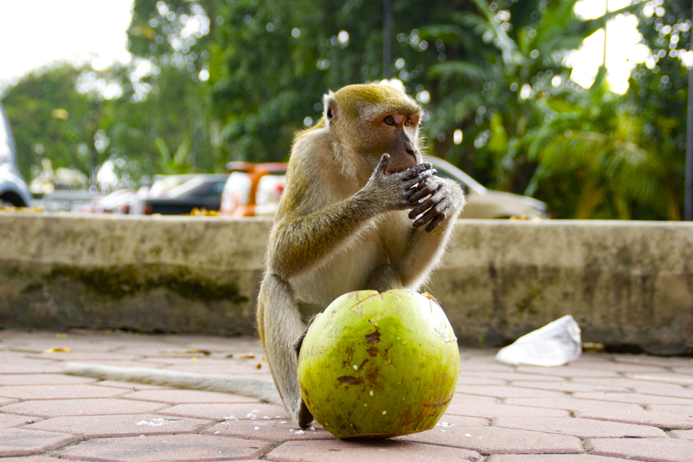 1 monkey coco.jpg