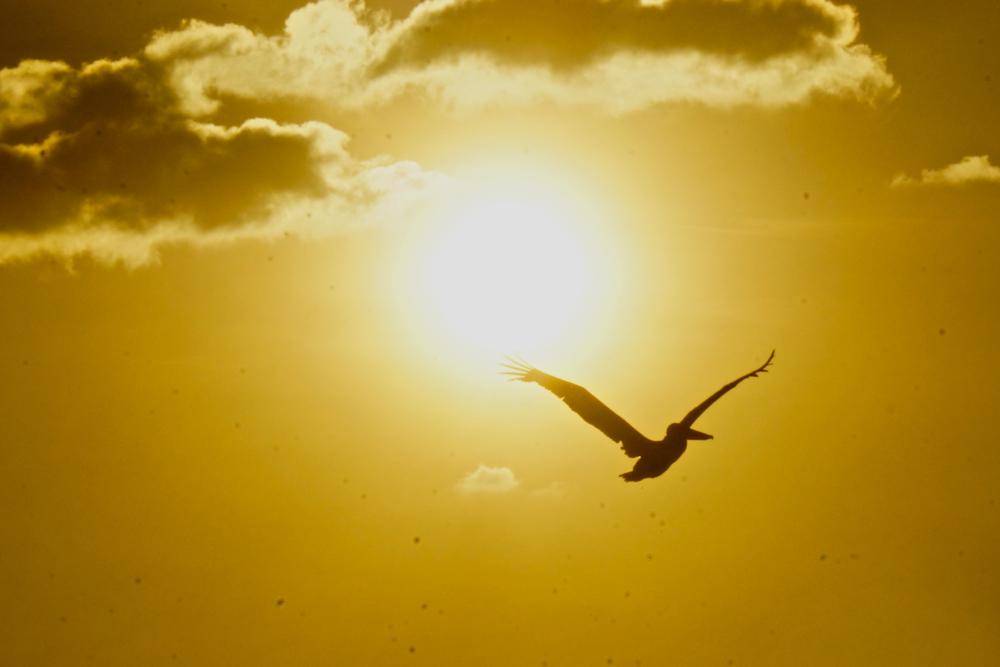 22 bird 2.jpg