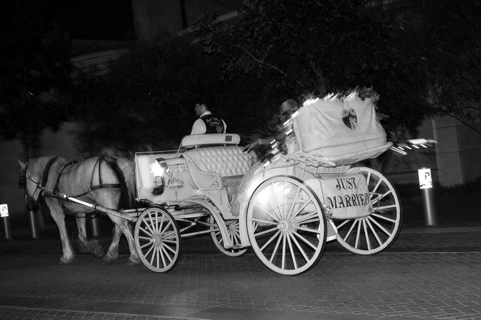 White- Carriage Ride.jpg