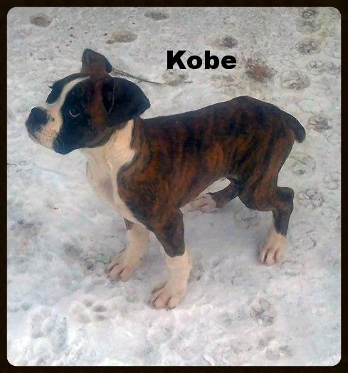 kobe2.jpg
