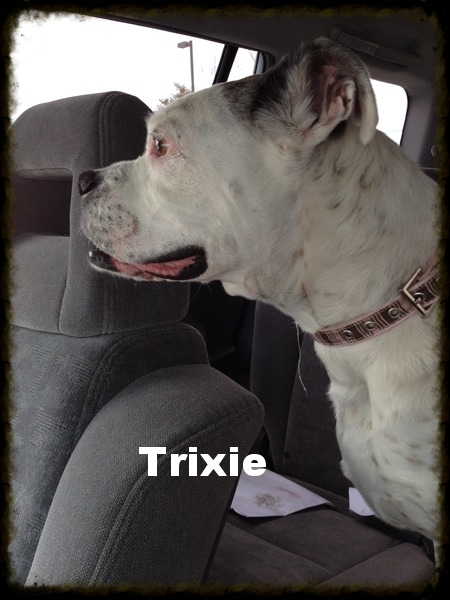 trixie1.jpg